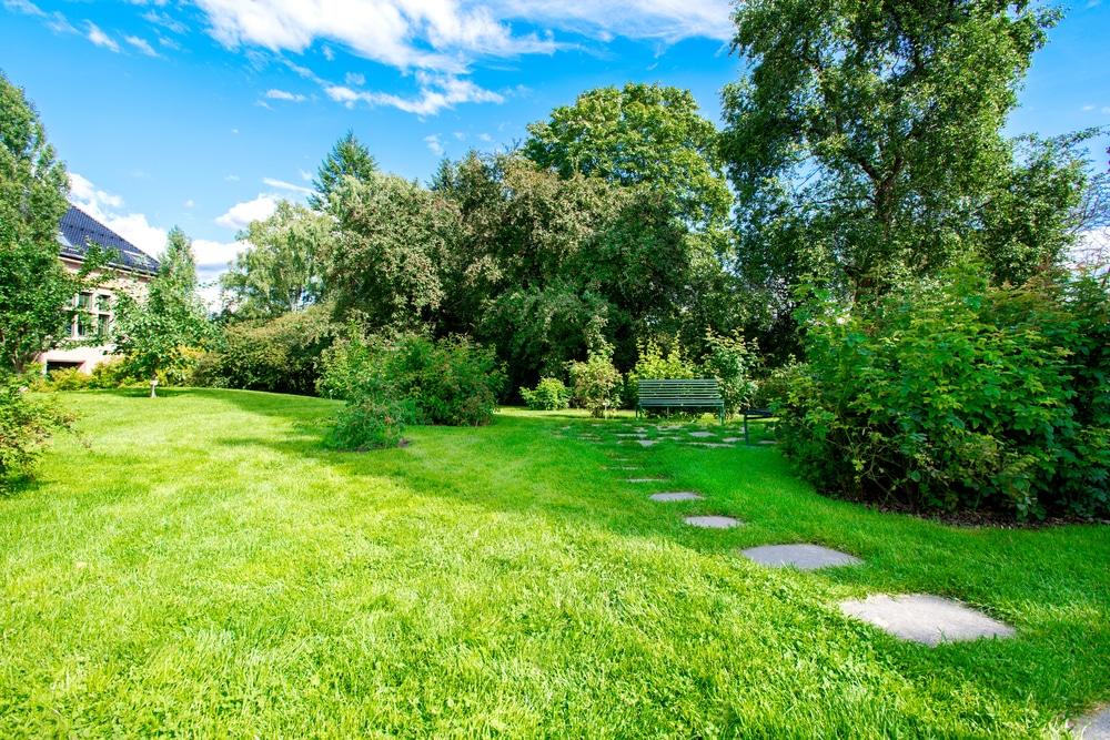 Llega el verano mantenimiento de parques y jardines for Mantenimiento parques y jardines