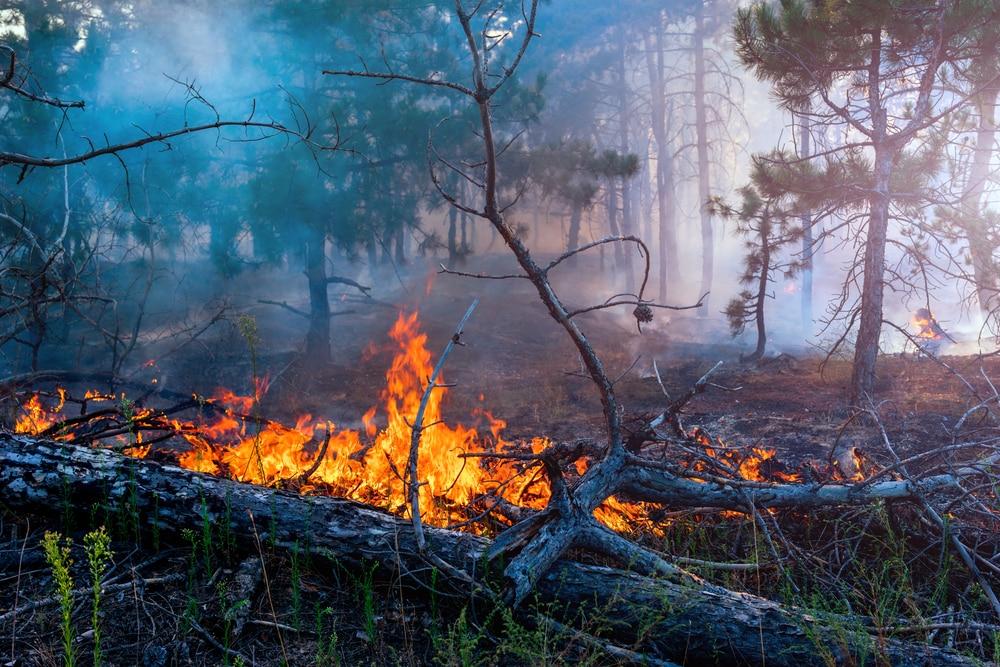 un paisajista cualificado ayuda aprevenir incendios